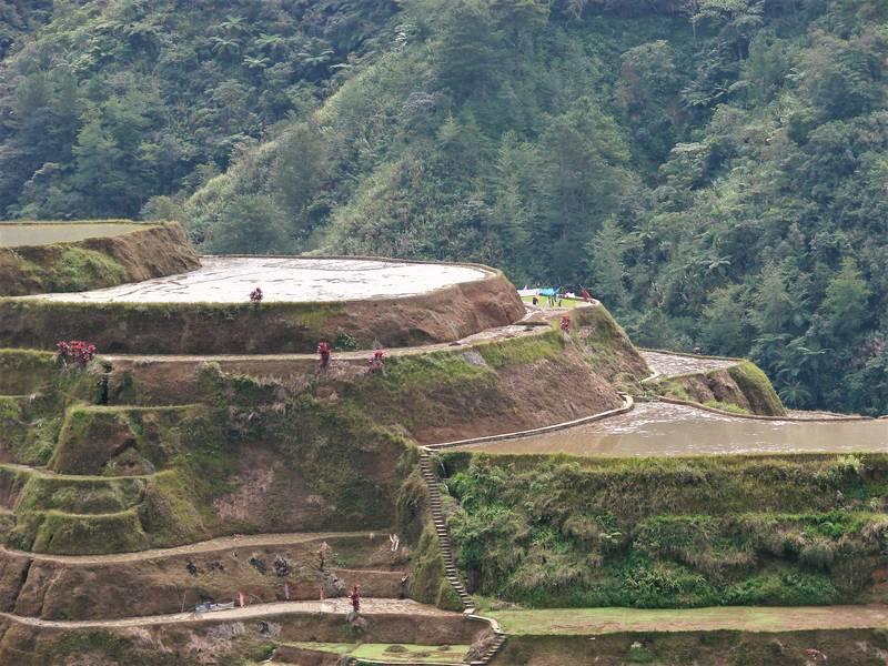 The beautiful rice terraces in Banaue