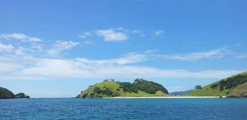 Dolphin Cruise in the Bay of Islands - 10 Awesome Things To Do In New Zealand