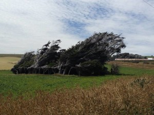 Trees at Slope Point