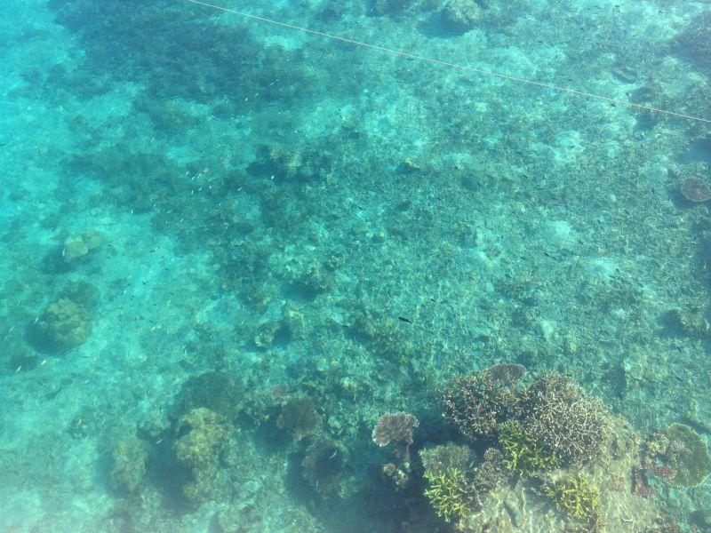 Coral at Tioman