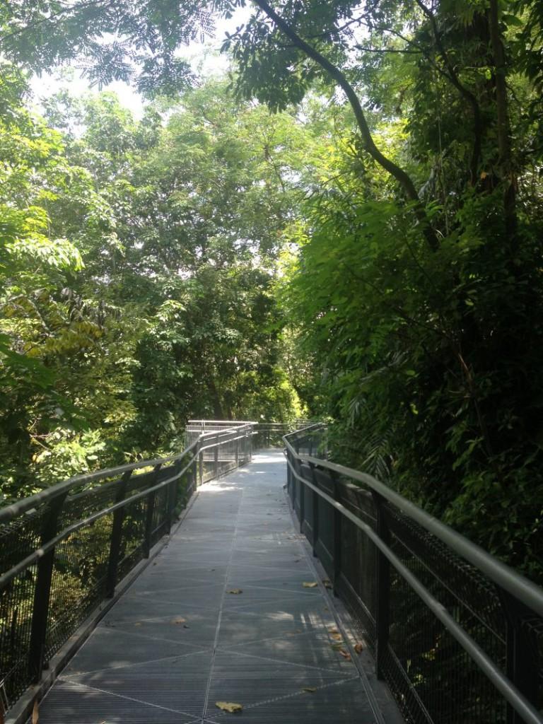 The Southern Ridges Walk - Mount Faber Singapore