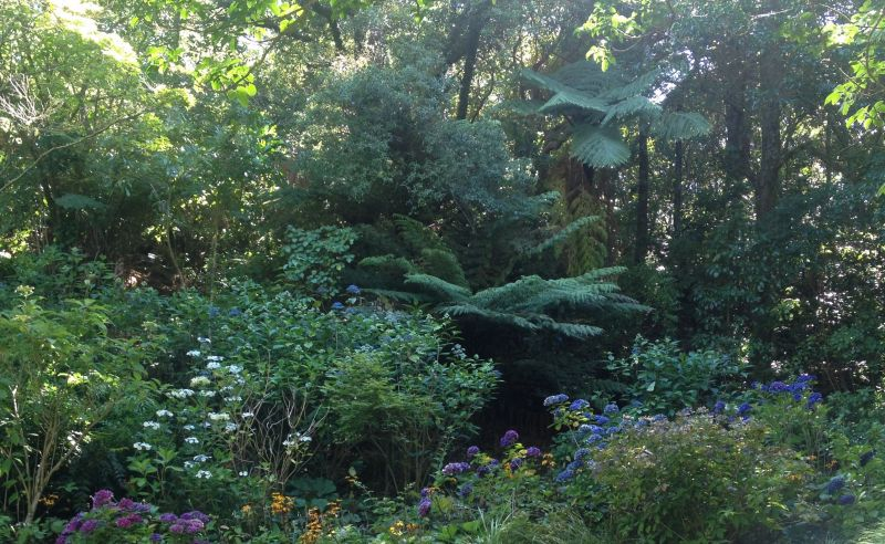 Botanic Gardens Wellington