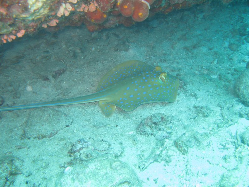 Scuba Diving In Malaysia 4 Awesome Dive Spots Around Tioman