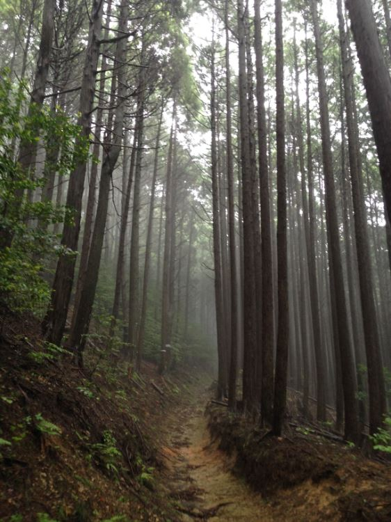 Mysterious mists on the Koyasan chōishi-michi pilgrimage trail