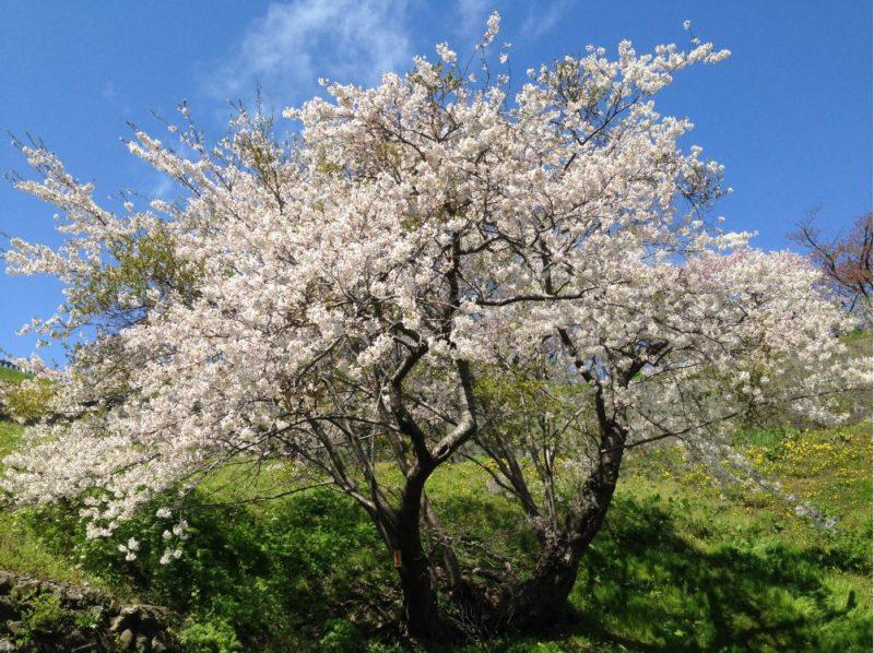 Hokkaido 10 day road trip itinerary