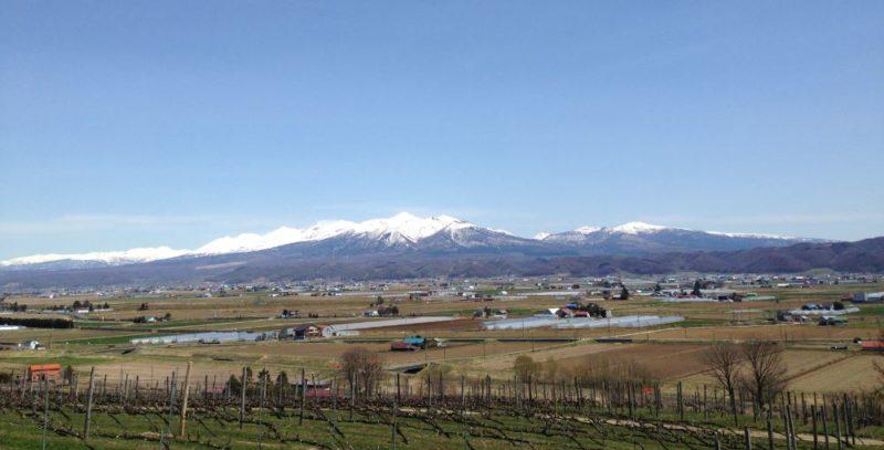 Wine fields Furano Hokkaido Japan
