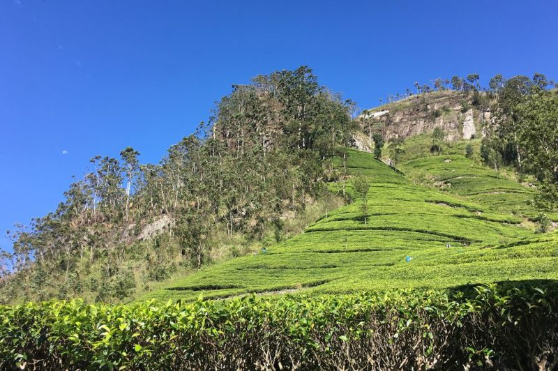 Dambatenne Tea Factory in Haputale, Sri Lanka
