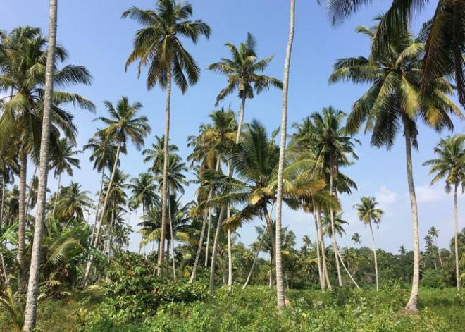 Sri Lanka Daily Budget - daily costs of travel in Sri Lanka