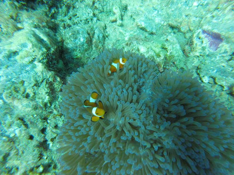 Guide To The Perhentian Islands: Diving, Snorkeling And Relaxing