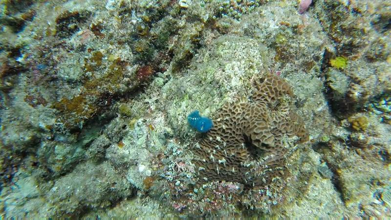 Cristmas tree worm Perhentian Islands scuba diving