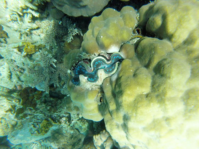 Diving Perhentian Islands Malaysia - giant clam