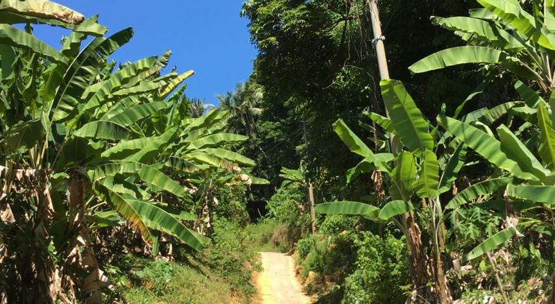 Hiking on the Perhentian Islands in Malaysia - jungle trails