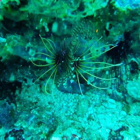 Scuba Diving in Weligama Sri Lanka