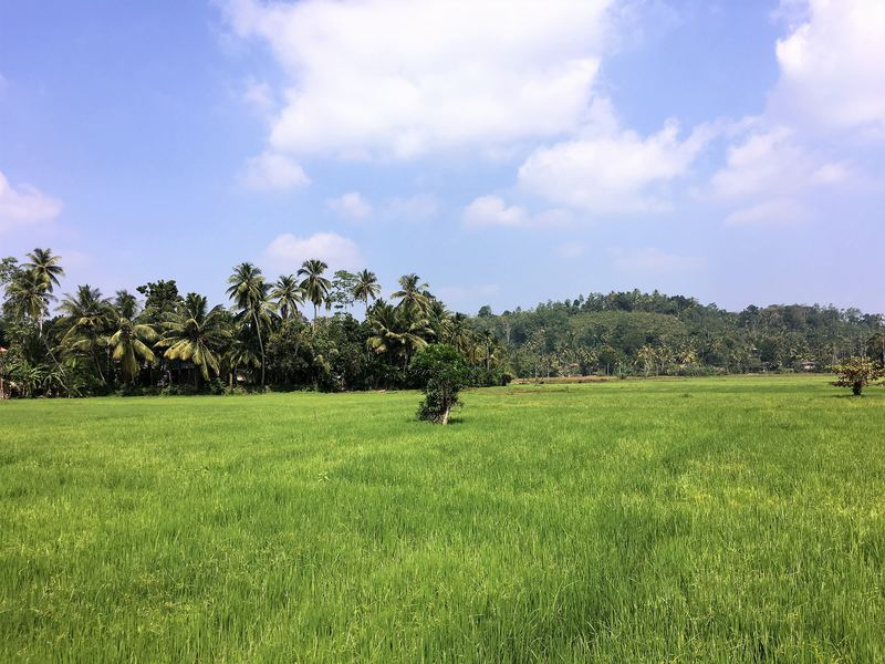 Green fields around Galle Sri Lanka