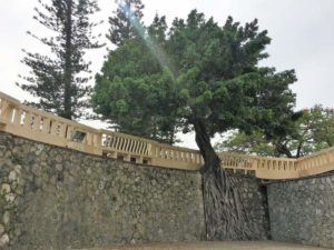 At the Great South Gate in Tainan trees are growing over the walls