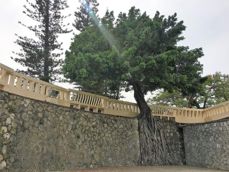 Trees growing over the wall at the Great South Gate Tainan