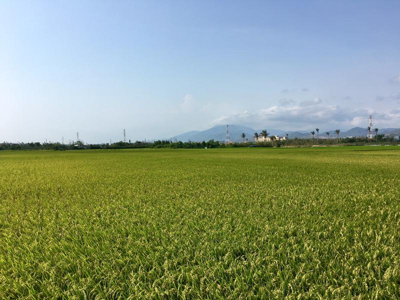 Beautiful green fields outside Hengchun town on the way to Longluan Lake