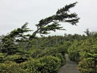 Best hikes on Vancouver Island - the Wild Pacific Trail