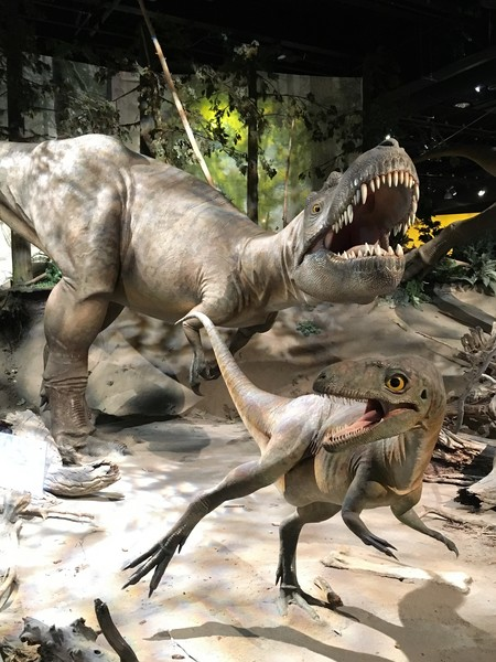 Visit the Royal Tyrrell Museum in Drumheller - famous dinosaur museum