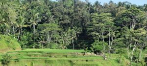 Bali things to do rice terraces Tegallalang - sightseeing around Ubud