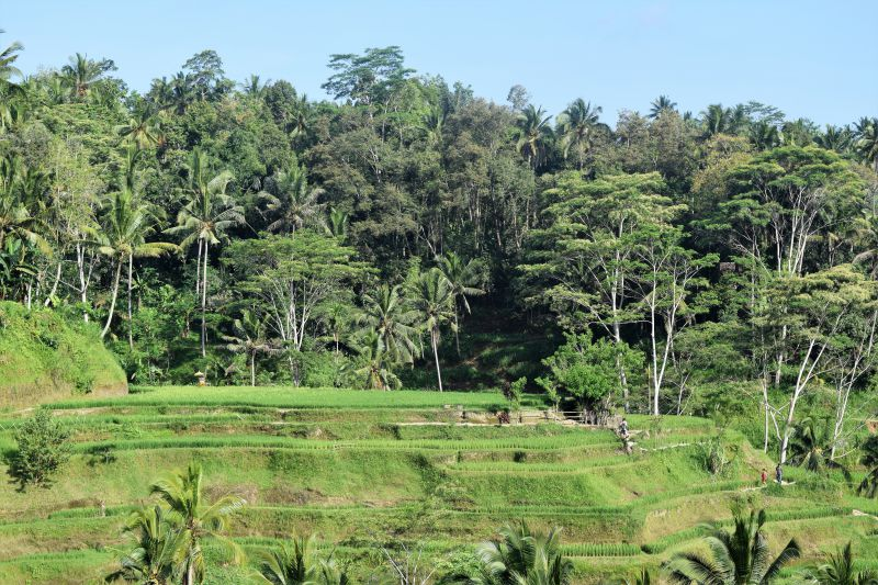 Get To Know The Real Bali: Live Like A Local In Sebatu Village