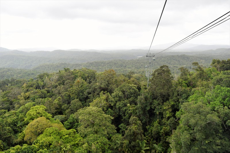Flying over the tropical rainforest in Cairns Australia