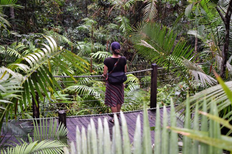 Red Peak Station on the Skyrail Rainforest Experience Cairns