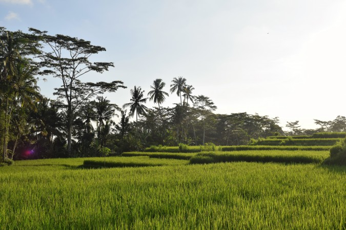 Scooter itinerary 1 day around Ubud Bali