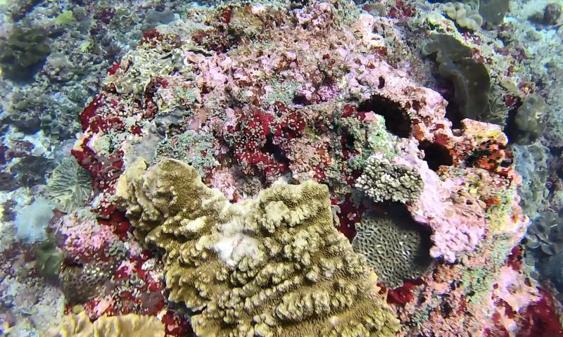 Scuba diving Nusa Penida - coral garden - best places in the world to go scuba diving Bali