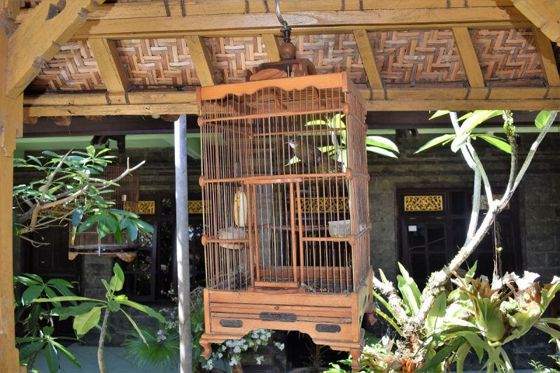 Stay with Duara Travel in Sebatu Bali Indonesia