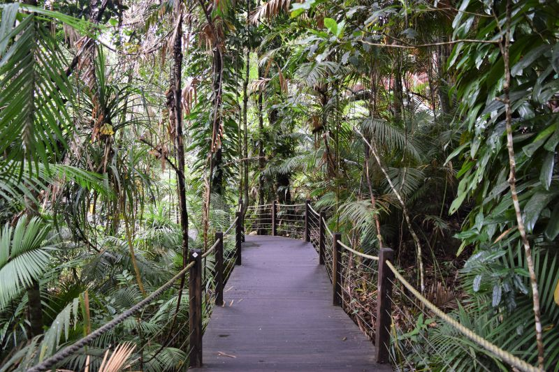 The amazing rainforest at Cairns - why you should visit