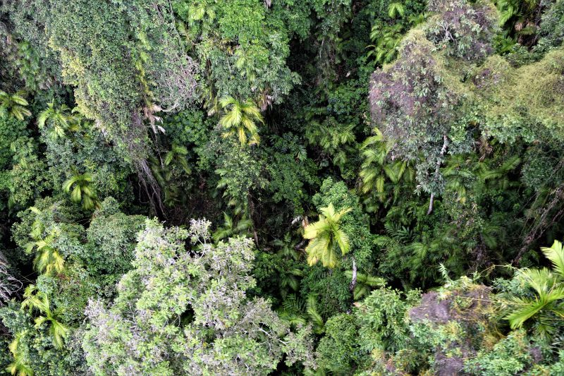 Things not to miss around Cairns - the Skyrail Rainforest Cableway