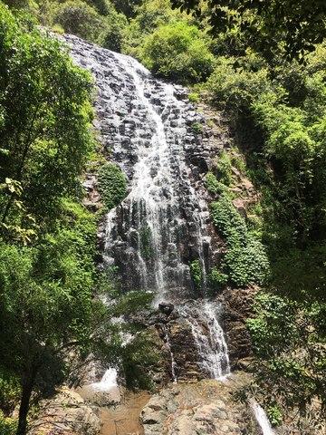 Dorrigo Rainforest - Wonga Walk