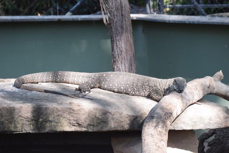 Rockhampton Botanical Gardens and Zoo - Australia East Coast