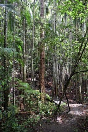 Wompoo circuit Mapleton Falls - short hike Queensland