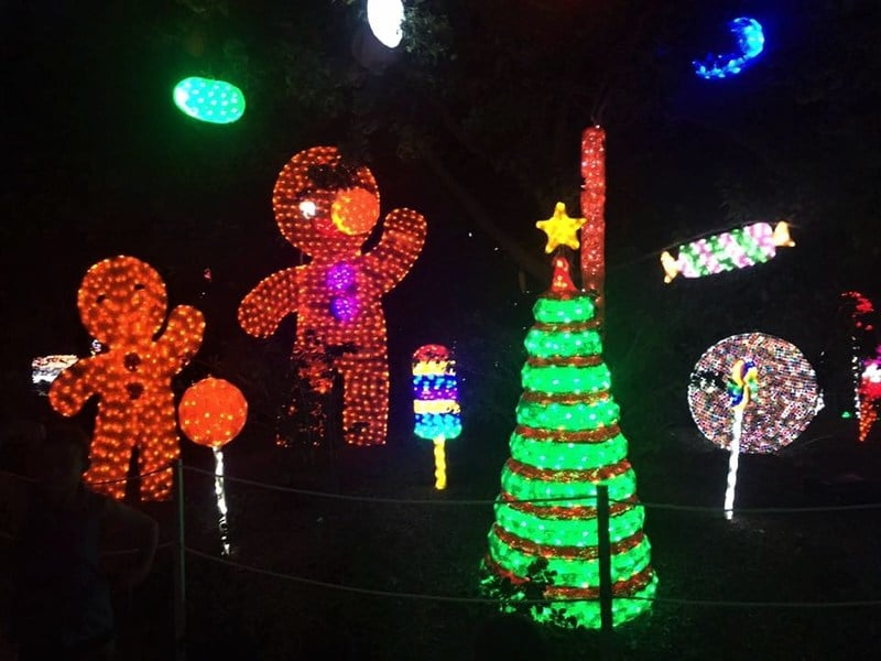 Christmas lights at the Hunter Valley Garden