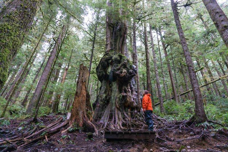 Avatar Grove Port Renfrew BC