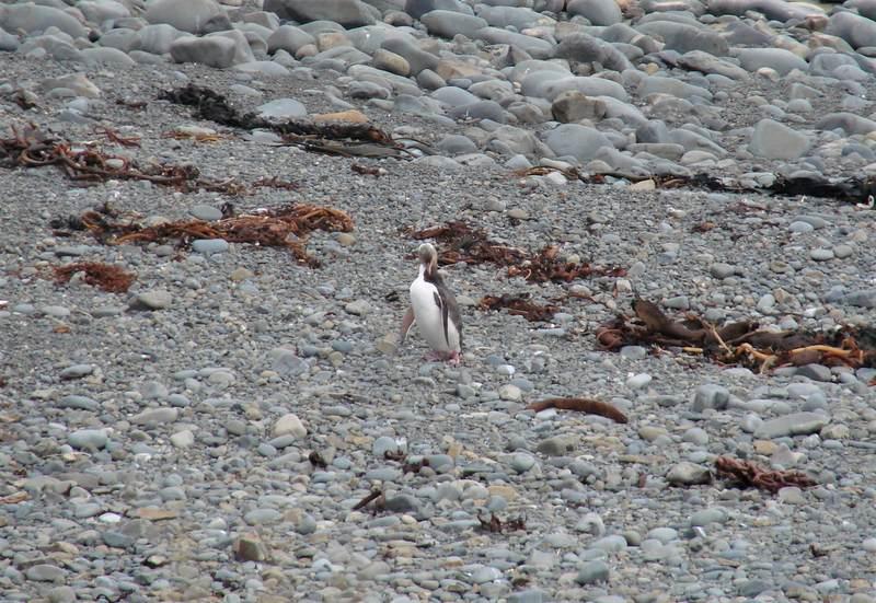 Penguin New Zealand