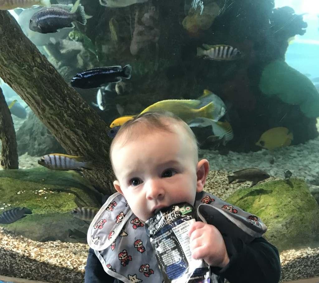 Little boy at Ripleys Aquarium Toronto