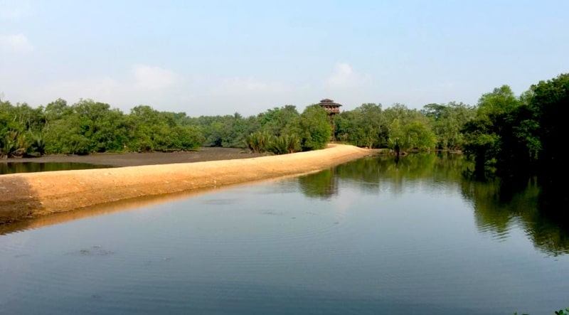 Sungei Buloh Wetland Reserve Singapore