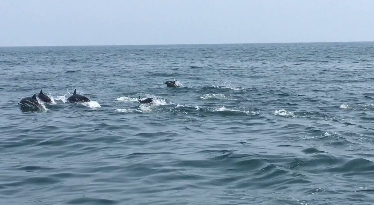 Dolphin watching Muscat Oman