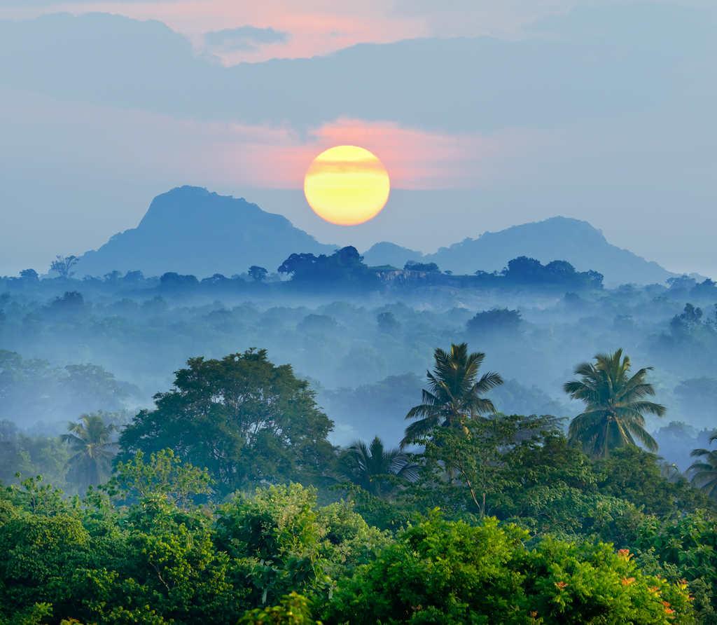 Matahari terbit yang indah di atas hutan di Sri Lanka