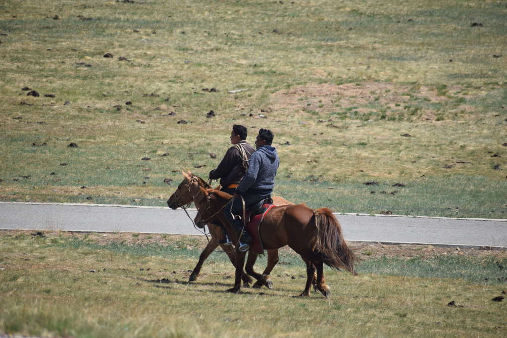 Mongolian horses on the steppe