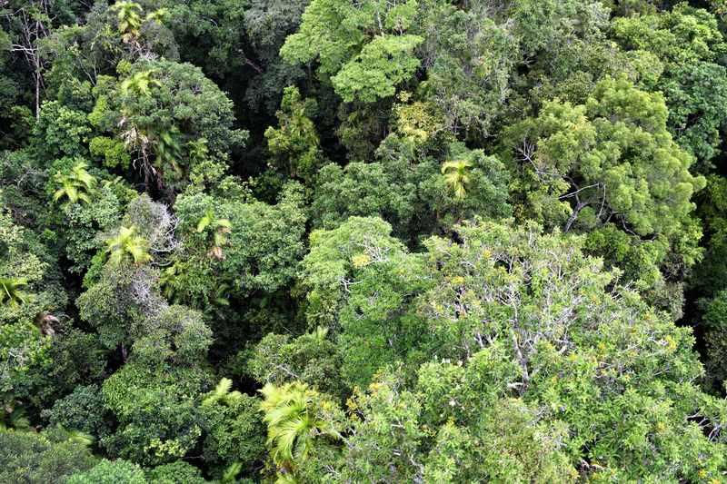 Rainforest Gibbon Experience Laos