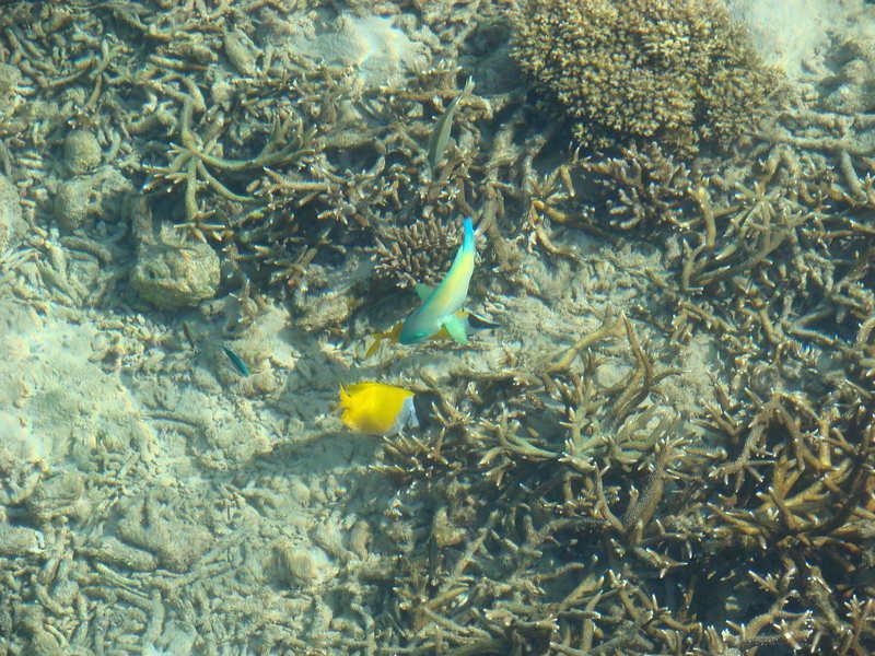Colorful fish swimming around the pier on Tioman Island Malaysia