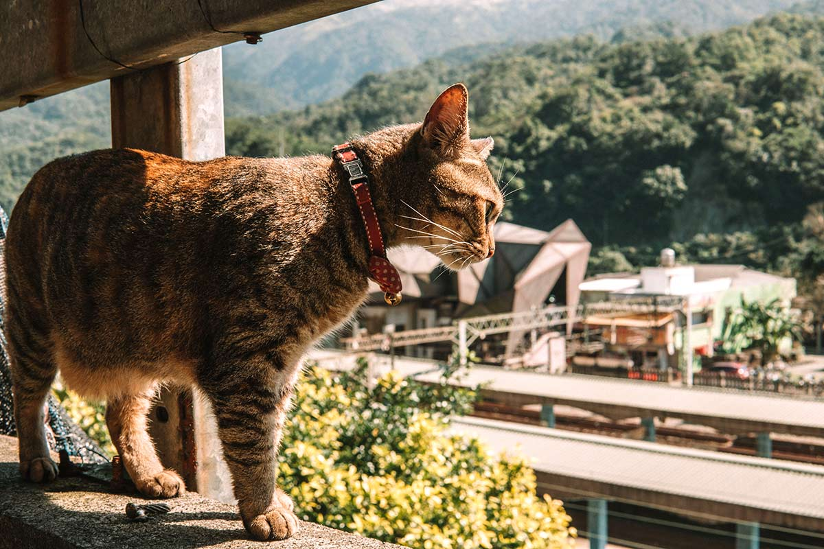 Houtong Cat Village Taiwan - photo by CK Travels