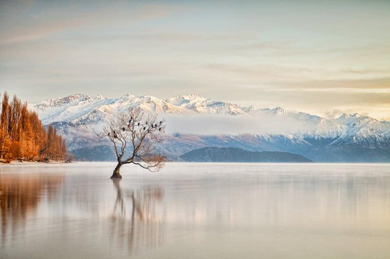 Wanaka Tree Lake Wanaka South Island New Zealand